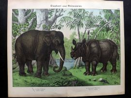 Kirby & Schubert 1889 Antique Print. Indian Elephant & One-horned Rhinoceros